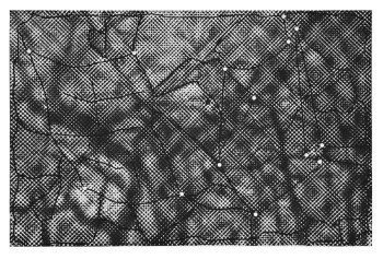Paul Coldwell, Canopy II (2011), relief print from laser cut blocks, image 37 x 56 cm, sheet 56 x 76 cm. Edition of 4. Printed and published by the artist, London.