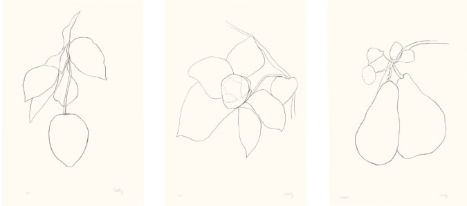Figs. 1, 2, 3. Ellsworth Kelly, Suite of Plant Lithographs: Lemon (Citron), Camellia II and Pear II (Poire II) (all 1964–65), lithograph on Rives BFK paper, 89.9 x 61.6 cm. Edition of 75. Collection of Jordan D. Schnitzer. ©Ellsworth Kelly and Maeght Editeur, Paris.