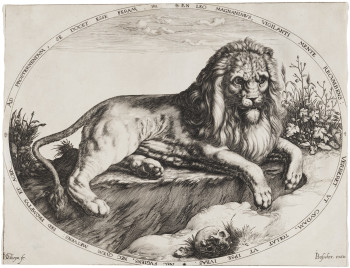 Jacques de Gheyn II, Great Lion (c. 1590), engraving. Harvard Art Museums/Fogg Museum, Anonymous Fund for the Acquisition of Prints Older than 150 Years, 2009.46. ©2011 President and Fellows of Harvard Col- lege. Photo: Department of Digital Imaging and Visual Resources, Harvard Art Museums.