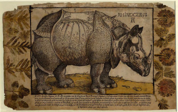 Fig. 4. Artist after Albrecht Dürer, printed by Hans Liefrinck the Elder, Rhinoceros (c. 1550), woodcut with hand-coloring, letterpress, and impressed plants, 26.1 x 41.3 cm. The British Museum. ©Trustees of the British Museum.